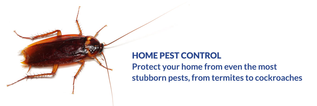 Home Pest Control - Protext your home from even the most stubborn pests, from termites to cockroaches