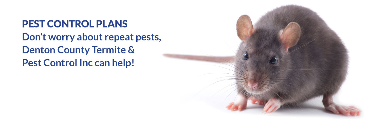 Pest Control Plans - don't worry about repeate pests, Denton County Termite & Pest Control Inc can help!